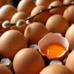 Eggs, Lecithin, Choline & TMAO
